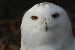Le chant d'un milliard et demi d'oiseaux disparu du ciel canadien