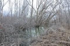 Environ 82% des ruisseaux disparus à Montréal