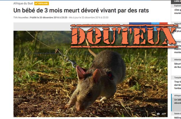 Un bambin tué par des rats en Afrique du Sud? Quelques problèmes avec cette histoire…