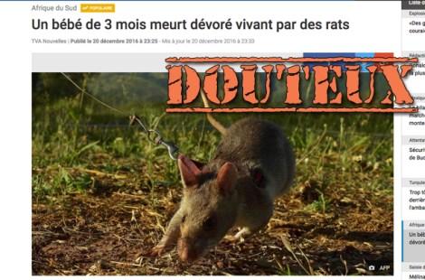 becc81becc81-rats-site-web