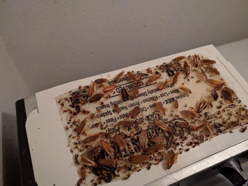 Punaises de lit et coquerelles: un proprio condamné à payer 20 000 $ à son ex-locataire