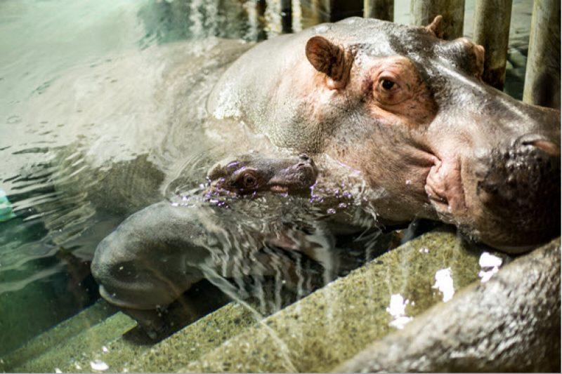 Record d'achalandage pour le zoo de Granby