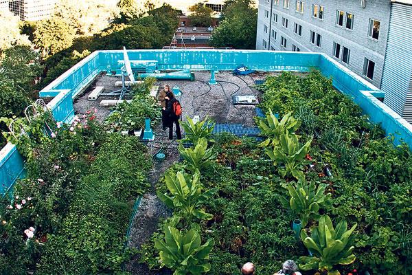 Des toitures végétalisées réclamées à Montréal