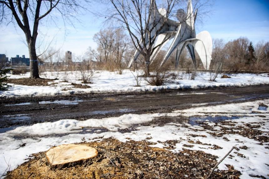 Un «massacre à la tronçonneuse» au parc Jean-Drapeau, dénonce Projet Montréal