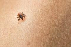 Maladie de Lyme: un accès aisé à l'antibiotique