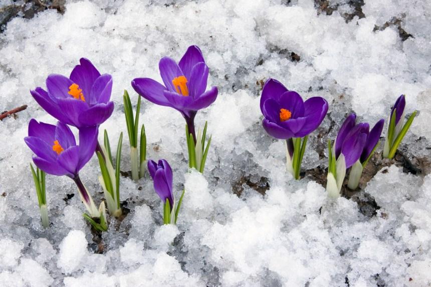 Le printemps arrive officiellement lundi matin