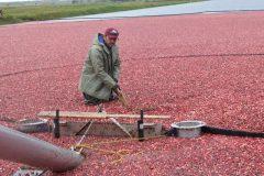 Agriculture: 75% des travailleurs proviennent de l'étranger