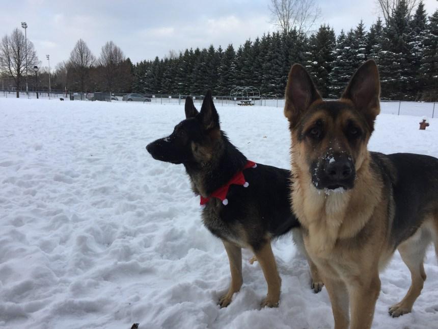 Des améliorations en vue au parc canin de Pointe-aux-Trembles