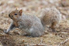 L'amour-haine des écureuils
