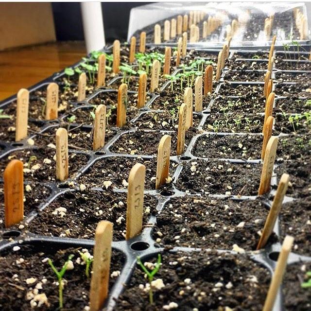 L'agriculture urbaine en fête