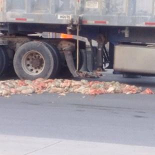 Des carcasses d'animaux sont tombées d'un camion conduit par un fournisseur de Sanimax. le 23 mai 2017 dans Rivière-des-Prairies.
