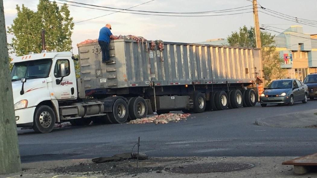 Des carcasses d'animaux sont tombées d'un camion conduit par un fournisseur de Sanimax. le 23 mai 2017.