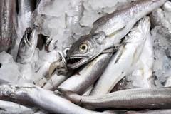 À Montréal, la majorité des poissons vendus sont étiquetés frauduleusement
