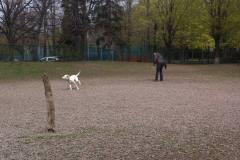 Les rénovations du parc à chiens de L'Île-des-Sœurs dépendantes de celles de la terre ferme