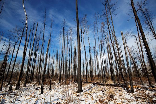 L'incendie de forêt de Fort McMurray en chiffres