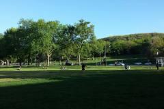 Une nouvelle ligne d'autobus estivale pour accéder au Parc du Mont-Royal