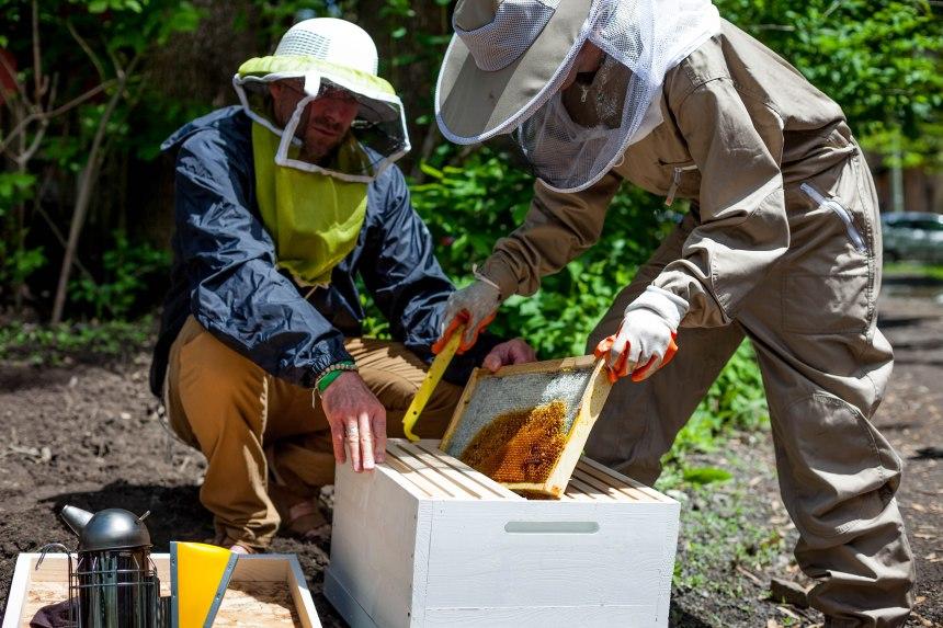 Miel d'abeille laSallois sur les toits