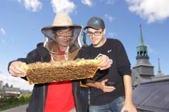 Réinsertion sociale: du miel pour adoucir son quotidien