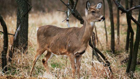 Près de 500 employés de la Sépaq en grève, perturbant les activités de chasse