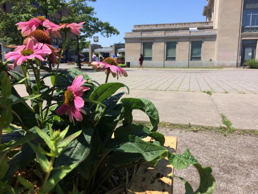 Des plants comestibles près du métro Parc