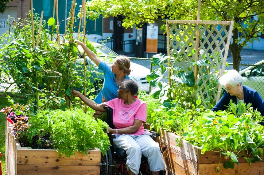 Du jardinage éducatif, thérapeutique et récréatif avec l'agriculture urbaine