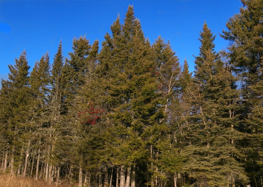 Interdiction de feux de forêt dans plusieurs régions du Québec