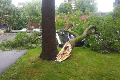 Arbre cassé dans Ville-Marie