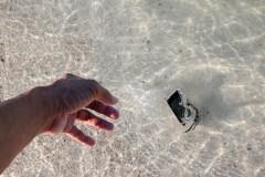 Que faire si votre cellulaire tombe dans l'eau?