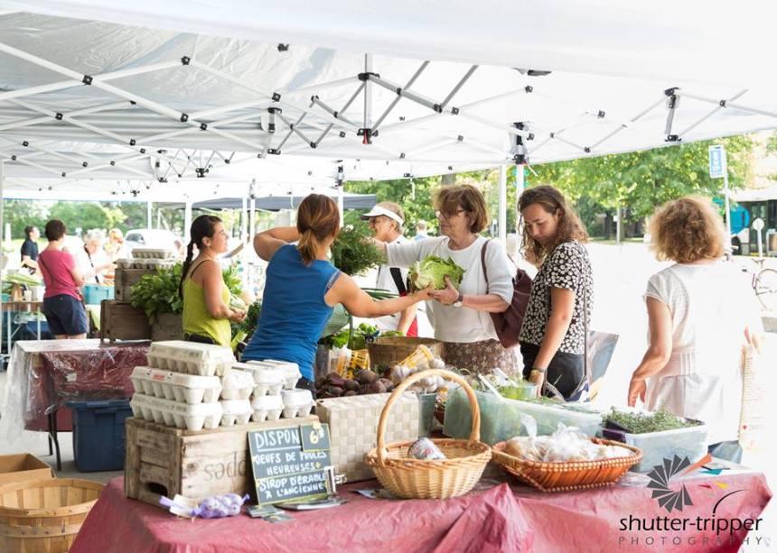 Retour du marché familial bio à l'Île-des-Soeurs