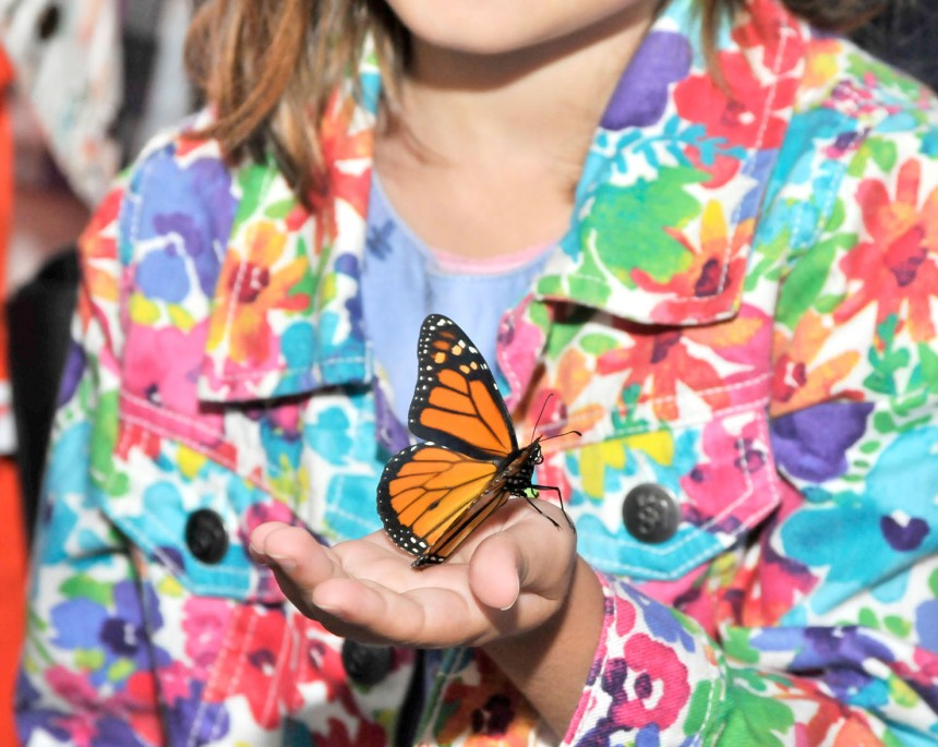 Attirer les papillons monarques à Lachine