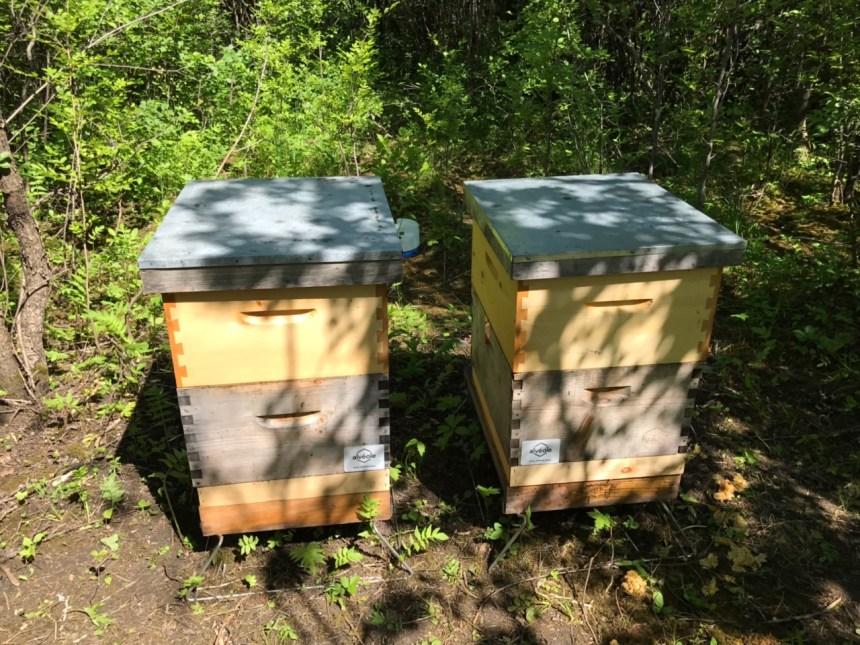 Institut Philippe-Pinel produira du miel
