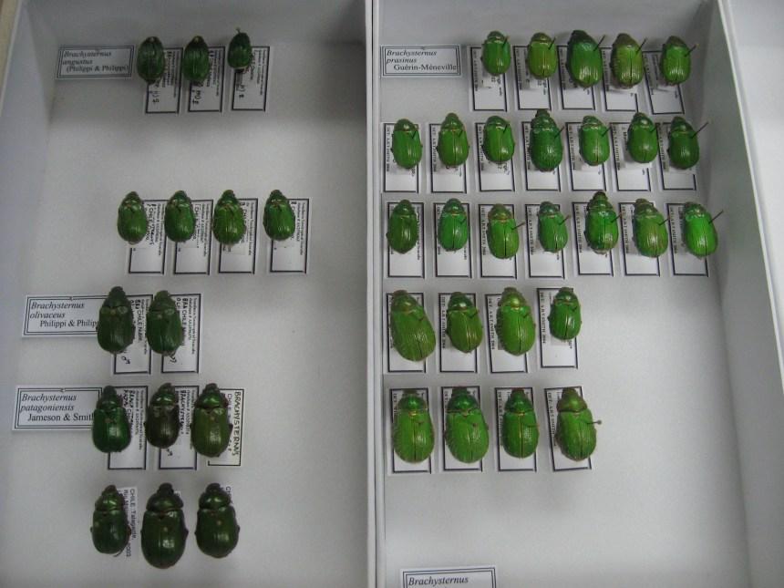 À la découverte de nouveaux insectes