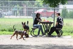 81 bêtes inscrites au registre sur les chiens potentiellement dangereux