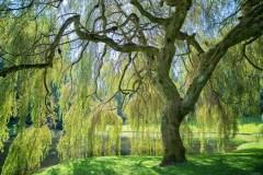 10 arbres qu'on ne veut pas dans sa cour