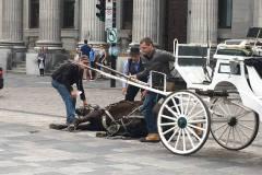 [VIDÉO] Un cheval de calèche s'effondre dans le Vieux-Montréal