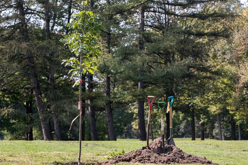 La place 375 000 arbres inaugurée au parc Maisonneuve