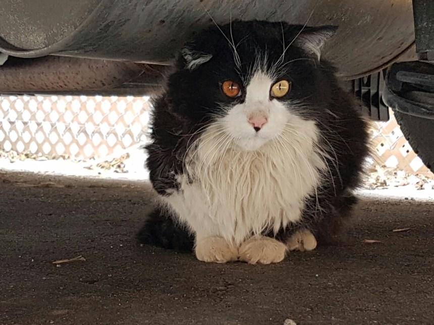 Un atelier pour réduire le nombre de chats errants dans Rosemont