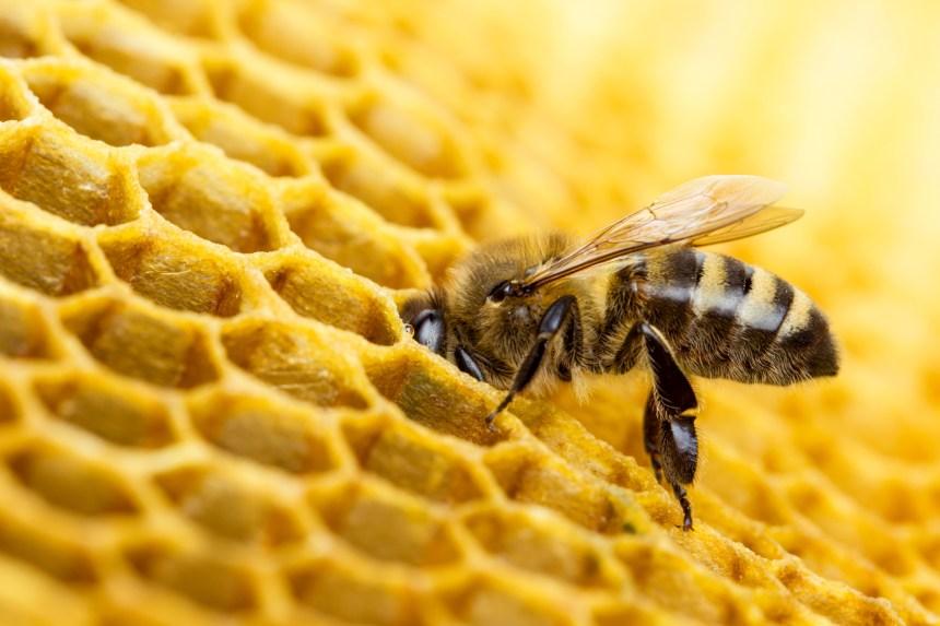 Les pesticides ne tuent pas que les abeilles