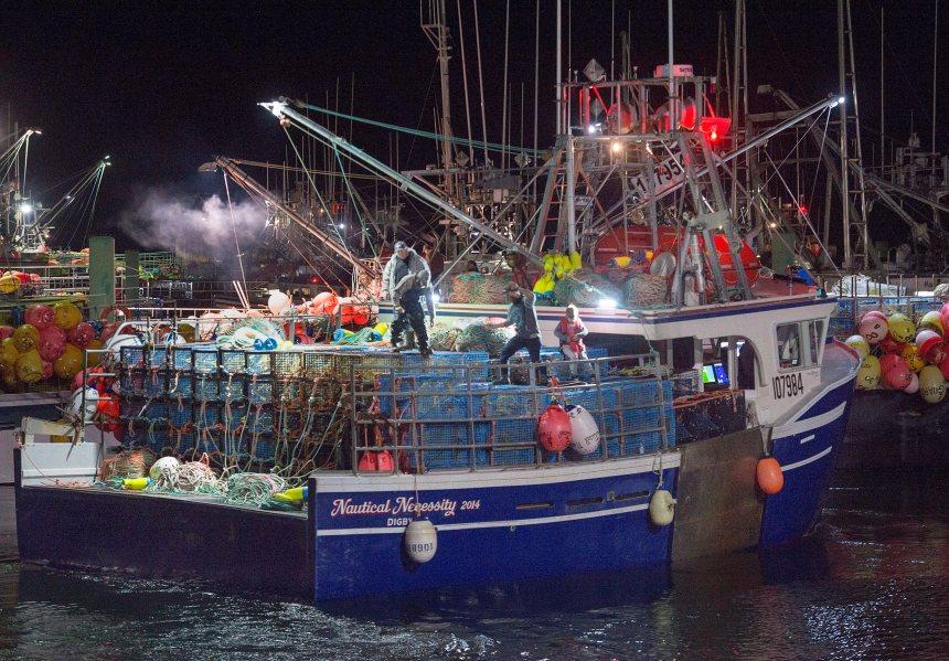 Des tonnes de homards saisis à Halifax