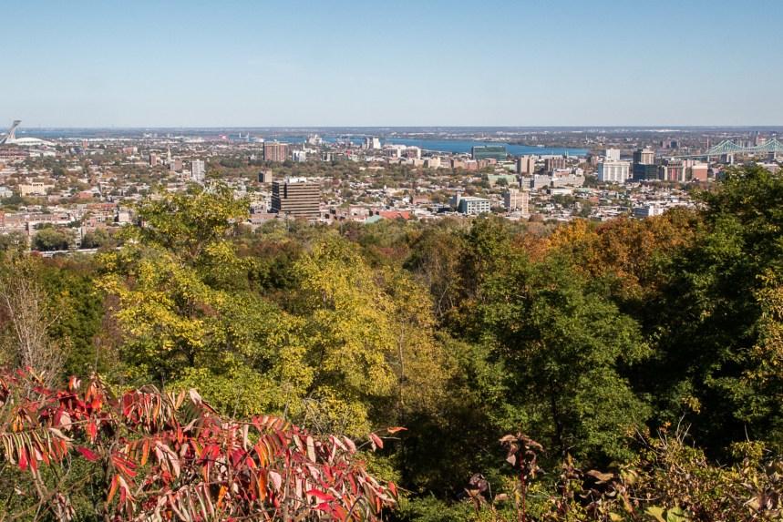 Le nombre d'arbres et d'espaces verts en augmentation dans le Grand Montréal