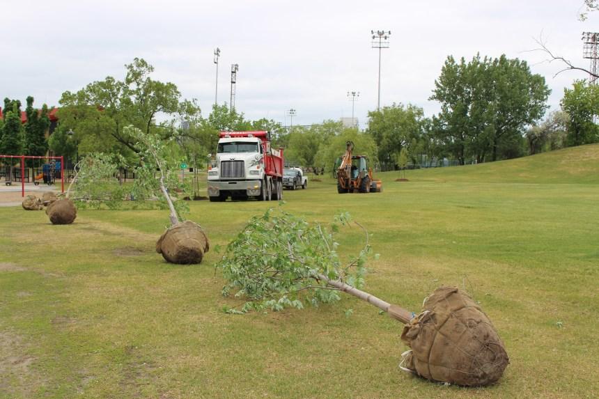 Des centaines d'arbres plantés d'ici la fin de l'année