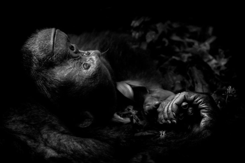 [Concours de photos] Horreur et beautés sauvages