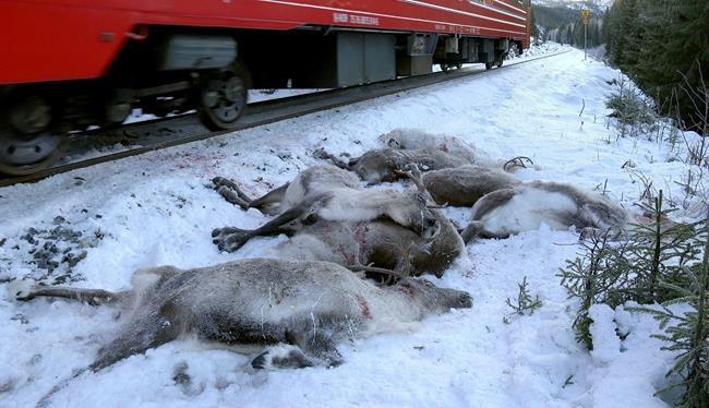 106 rennes tués en Norvège
