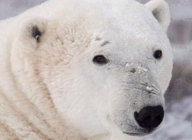 Revendications des Inuits dans l'Arctique