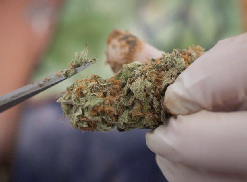 La place de la marijuana médicale en question