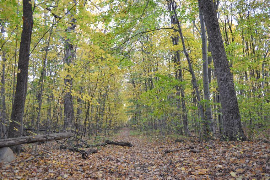 Un «Mouvement 87%» pour dénoncer la disparition des milieux naturels