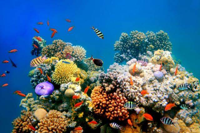 Parmi les animaux vivants, l'éponge de mer est notre plus ancien ancêtre