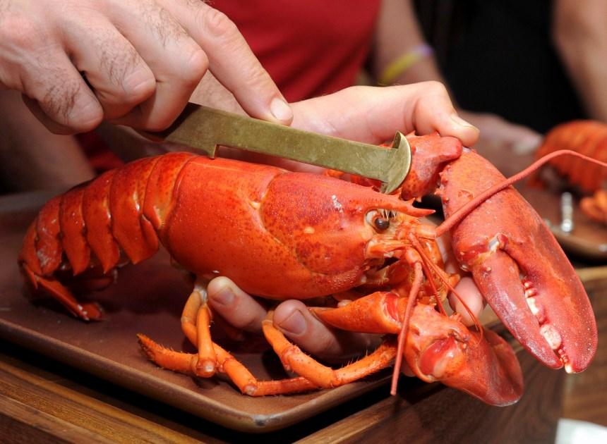 Une bière au homard concoctée en Nouvelle-Écosse