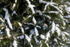Un chercheur veut créer l'arbre de Noël parfait