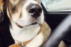 Mobilisation pour retrouver un chien volé dans une voiture